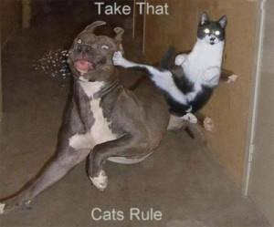 Photo: infinitecats.com